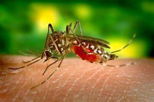 prueba de zika tras picadura mosquito Aedes